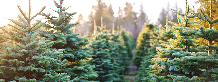 W&H Christmas tree